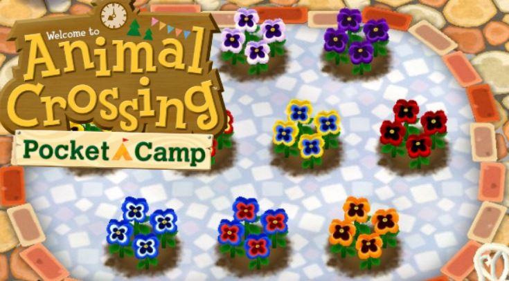 Croisement des fleurs sur  Animal Crossing Pocket Camp