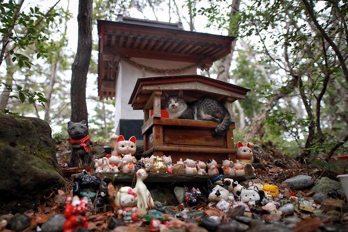 chat dans un sanctuaire japonais