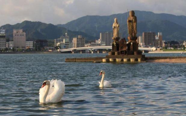 cygne lac shinji