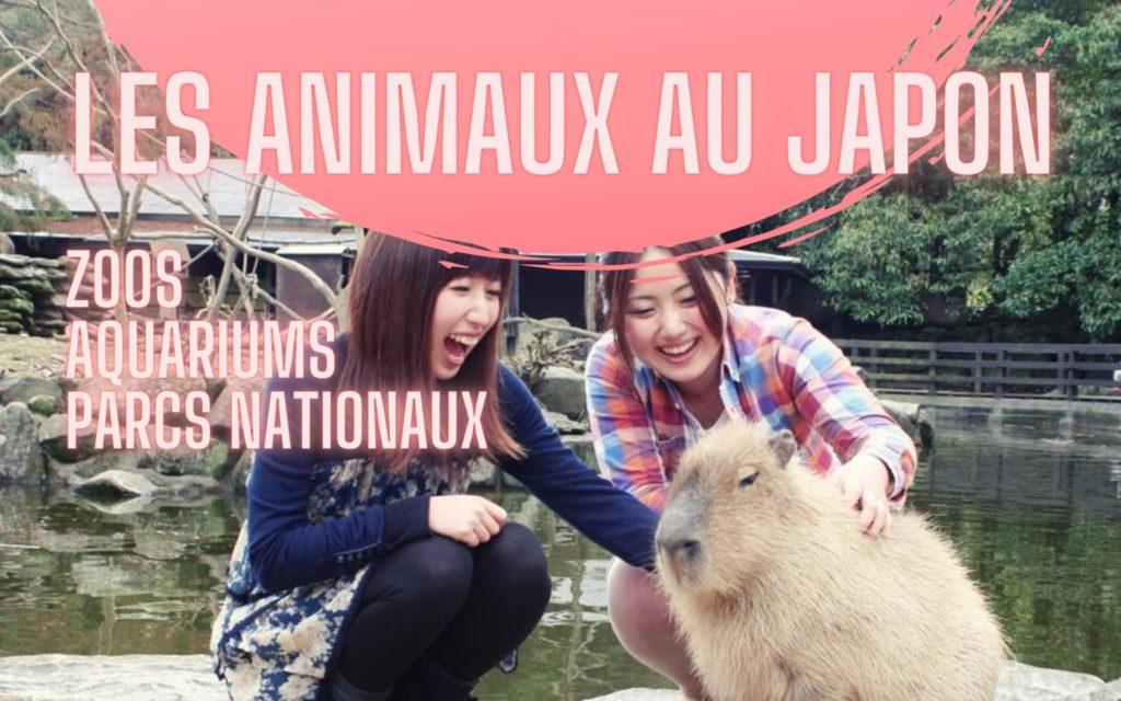 animaux au Japon capibara : zoos