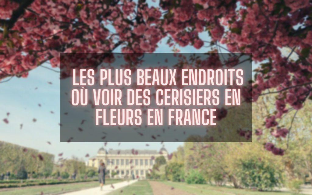 Les plus beaux endroits où voir des cerisiers en fleurs en France